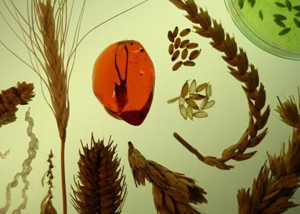 חול המועד – פסח במוזאון פתח תקוה