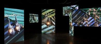 שיח גלריה בהשתתפות האמנית קרן גלר והאוצרת שלומית ברויר