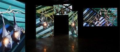שיח גלריה אחרון בתערוכה פרסונה פיקטה