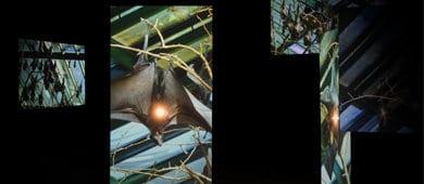 פרסונה פיקטה, שיח גלריה בתערוכה בהשתתפות קרן גלר והאוצרת שלומית ברויר